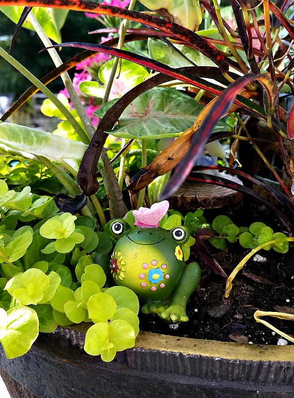 I wonder if the residents of our Fairy Garden know there is a frog hiding in the brush. jpg