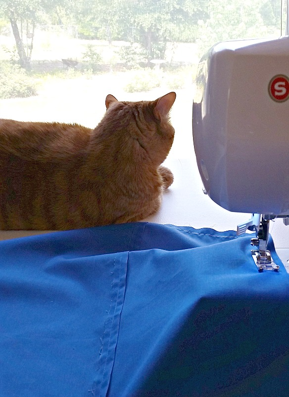 Hobblee is always my helper when I'm sewing