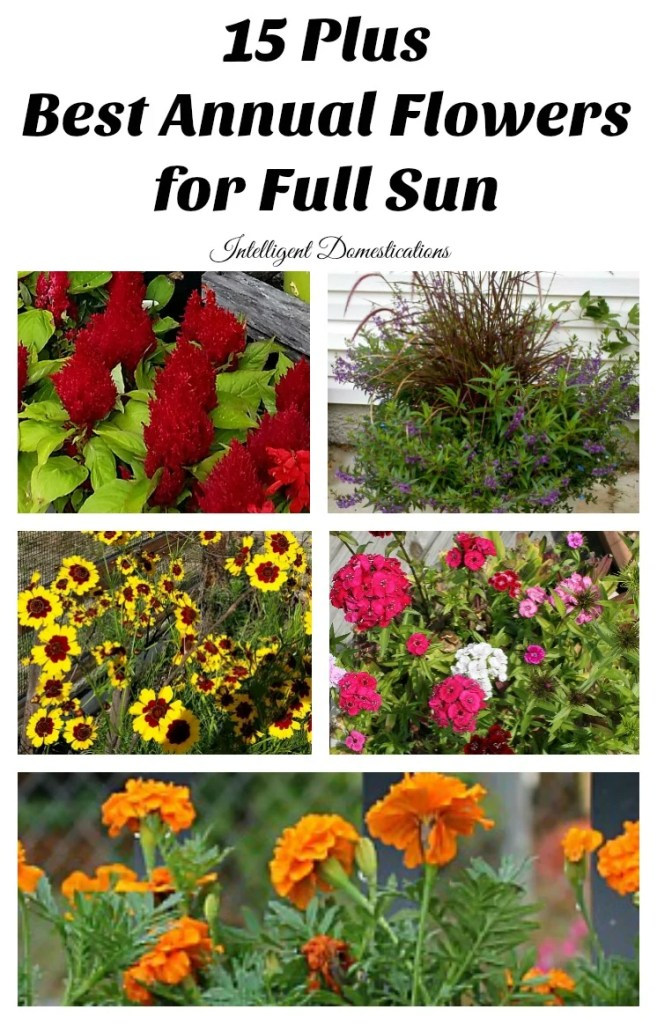 plus best annual flowers for full sun  intelligent domestications, Natural flower