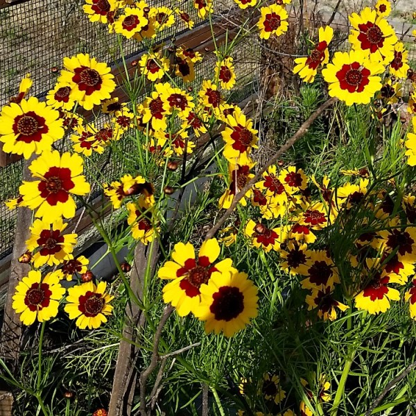 Best Annual Flowers for full sun. Best selection of annual flowers to plant in a sunny yard. Blooming flowers for a sunny location