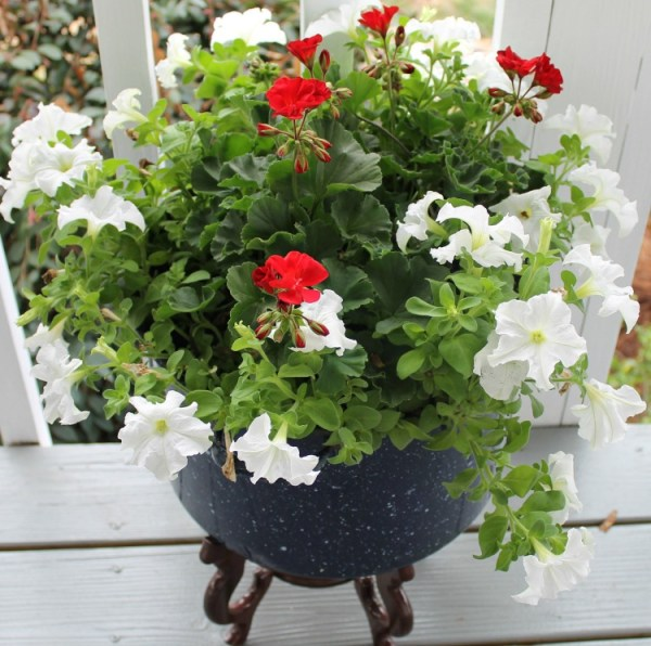 Repurpose an old enamelware canner pot into a large flower container.