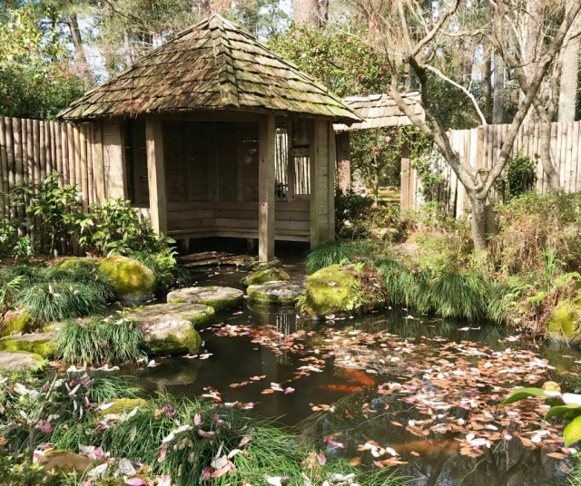 Massee Land Gardens at Fort Valley, Ga. Photos of the walking self guided tour. Camellia Gardens Tour. Japanese Garden. #visitgeorgia #walkingtour