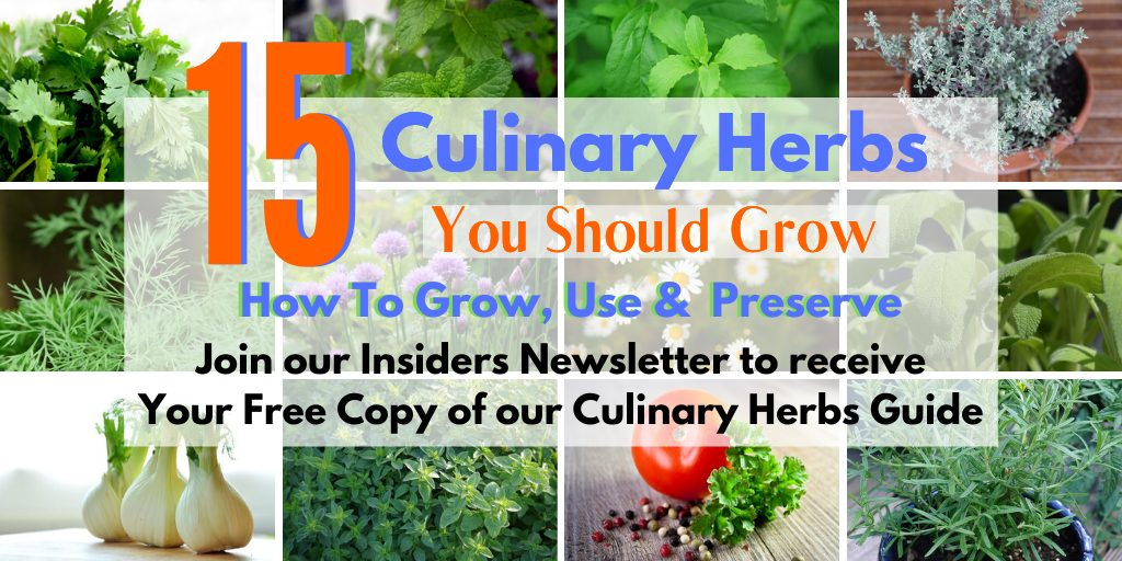 12 fresh herbs pictured