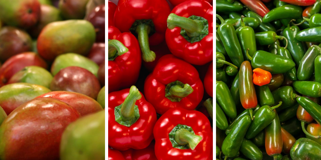 Mangos, Red Bell Pepper and Jalapeno peppers