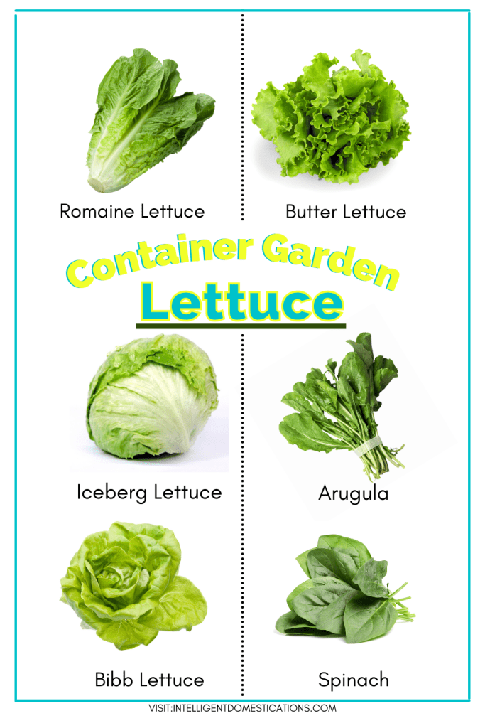 a chart with pictures of lettuce types you can grow at home