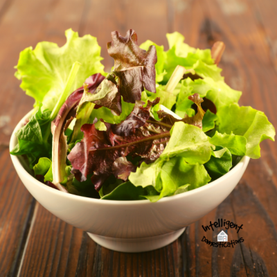 Types Of Lettuce To Easily Grow In Containers