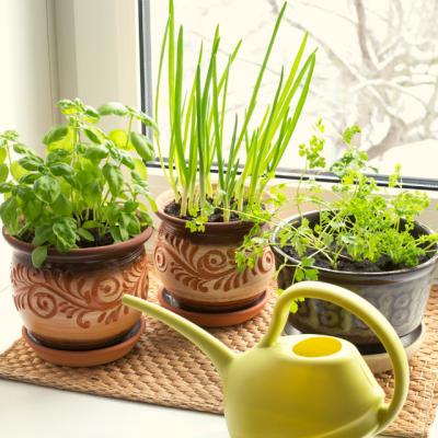 Salad Fixings You Can Grow Indoors
