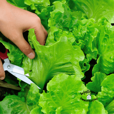 Salad Bowl Gardening Made Easy