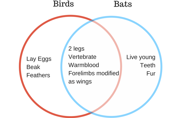 Venn Diagram Bats And Birds Blackdgfitness