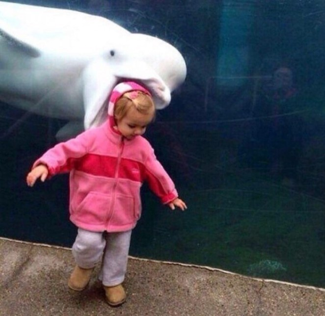 Perfectly timed photo of dolphin behind toddler