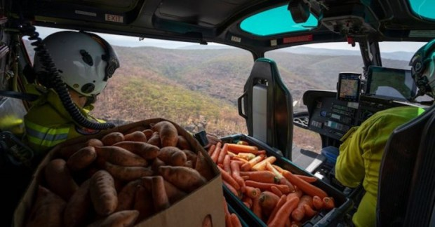 Image result for Food from Heli for Australian Animals