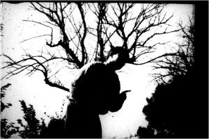 Yves e a árvore