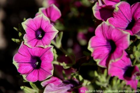 Flowers3971