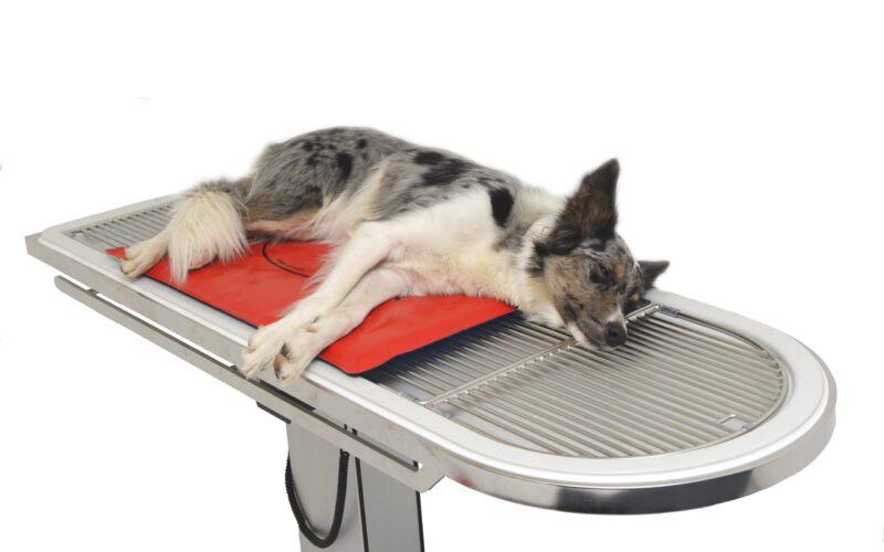 Hund auf Dormosafe Wärmematte