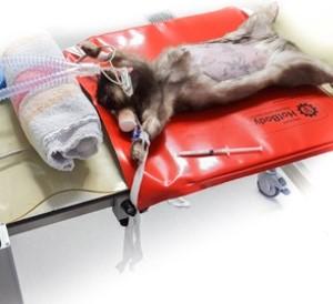 Zur Produktseite des Dormosafe Worktops für Kleintiere.