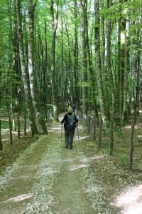 hiker in trees