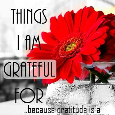 14 Things I am Grateful For Today