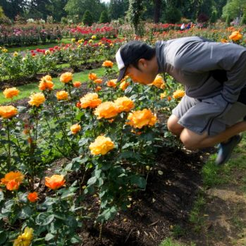 Portland International Rose Test Garden | Jumping Jedd | Intentional Travelers