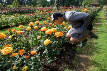 Portland International Rose Test Garden   Jumping Jedd   Intentional Travelers