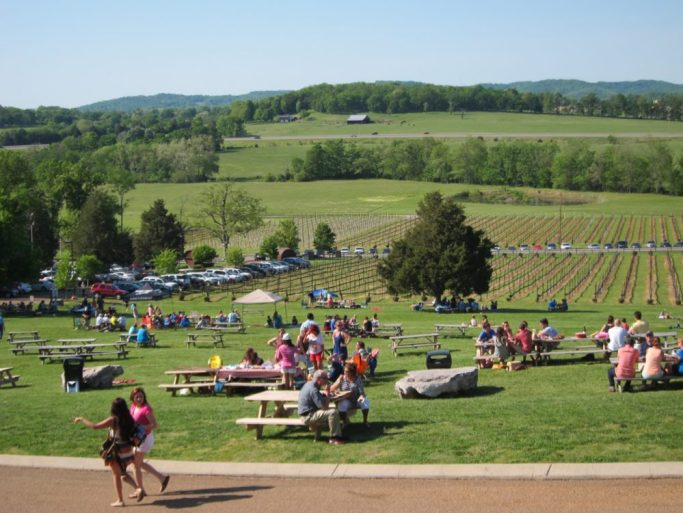 Music in the Vines picnic