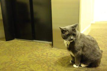 Resident hotel cat, Oreo