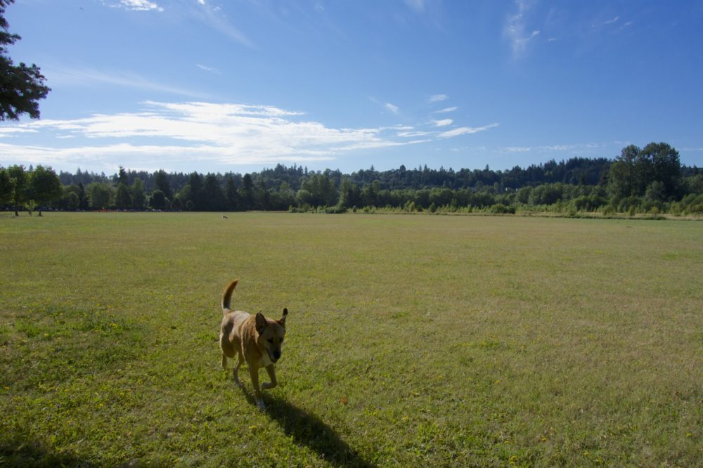 Dog park at Minto-Brown Park, Salem, Oregon | Intentional Travelers