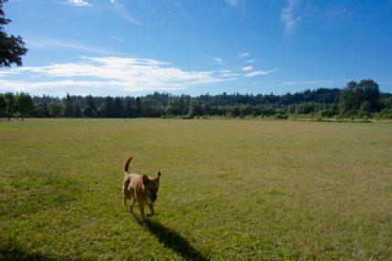 Dog park at Minto-Brown Park, Salem, Oregon | Intentional Travelers