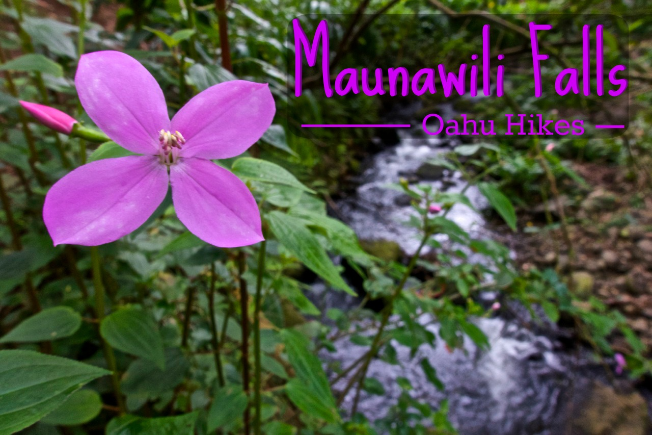 Maunawili Falls Hike - Oahu, Hawaii | Intentional Travelers