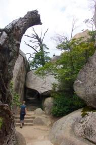 Miyajima, Things to Do Around Iwakuni, Japan | Intentional Travelers
