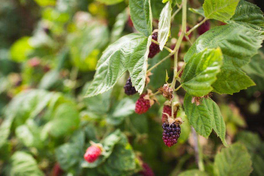 Boones Berry Farm | A Photographer's Tour of Portland | Kapono Photoworks via Intentional Travelers