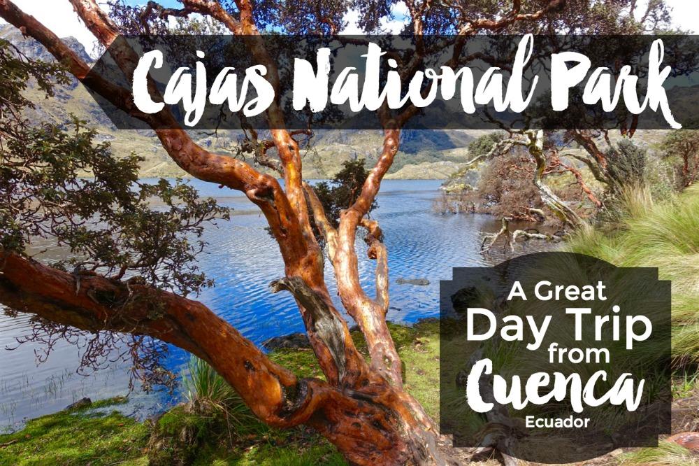 Ecuador National Tree