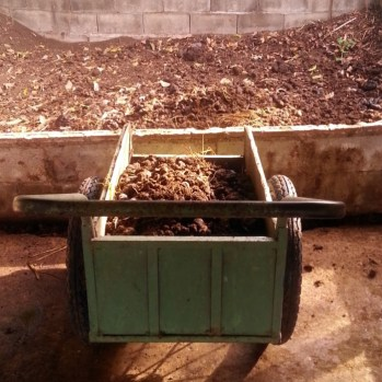 Making compost from cow manure!