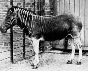 great extinct animals what happens