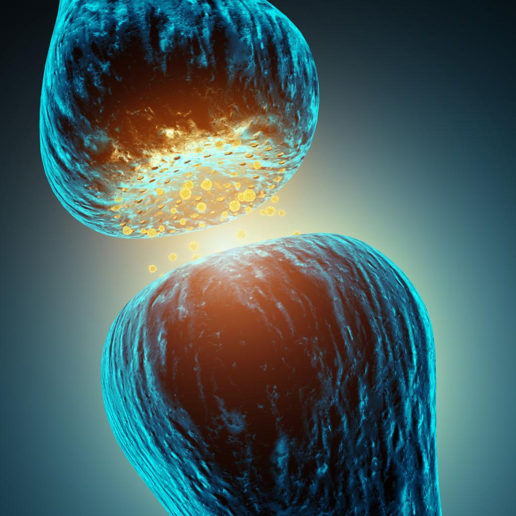Neurotransmitter between synapsing neurons