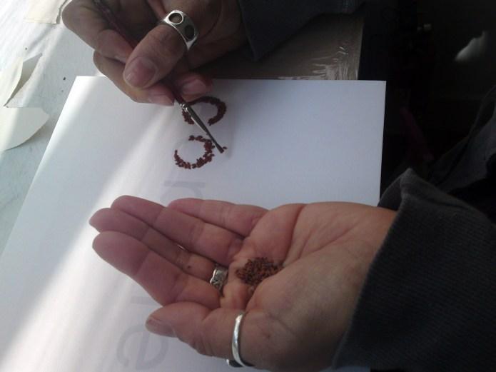 hand seeds