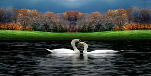 Beautiful-Birds-beautiful-nature-23813827-1600-1200-Copy