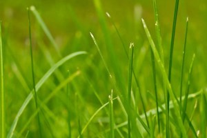 Lincolnshire Junior Golf update