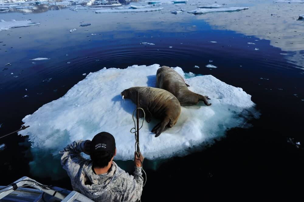 Ricky Kilabuk hunts walruses near Cape Mercy at the mouth of Cumberland Sound on Baffin Island.