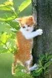iCat Free Cat Wallpaper
