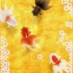 雅な金魚を愛でるiPhoneアプリ「和金魚」。