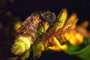glow-worm-marvell-poem