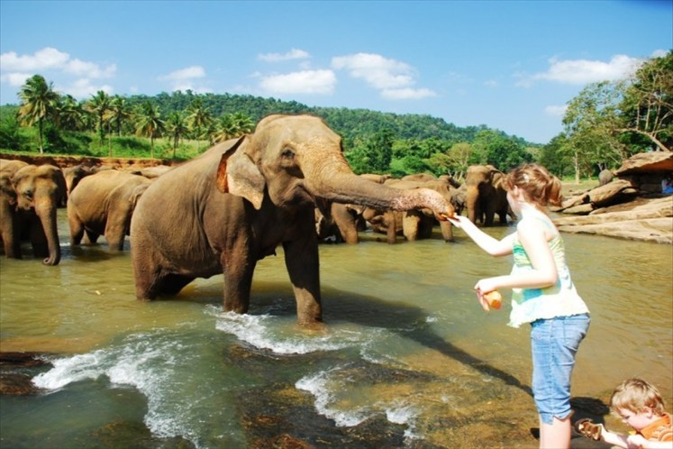 Pinnawala Elephant Orphanage facts