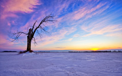 High-resolution desktop wallpaper Lonely Old Tree Sunset by TheReal7