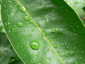 湿度を保つ