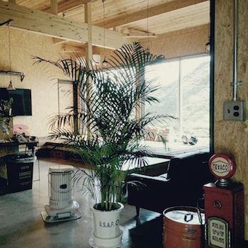 観葉植物をお部屋の目隠しに利用した画像