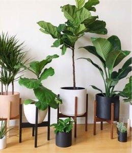 plant10-1