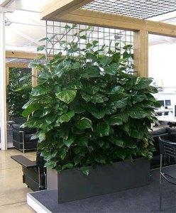 plants27-1