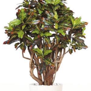 Croton Robusta - plante artificiale, plante lux