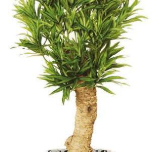 Dracaena Reflexa - plante artificiale, plante interior, plante lux