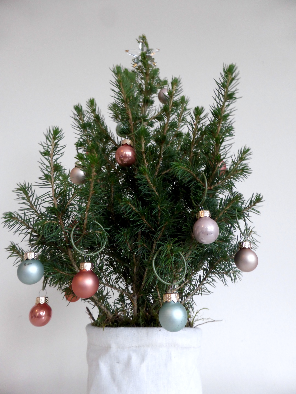 Christmas Tree Bloom & Wild